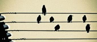 Trasvolata sulle arie della grande musica